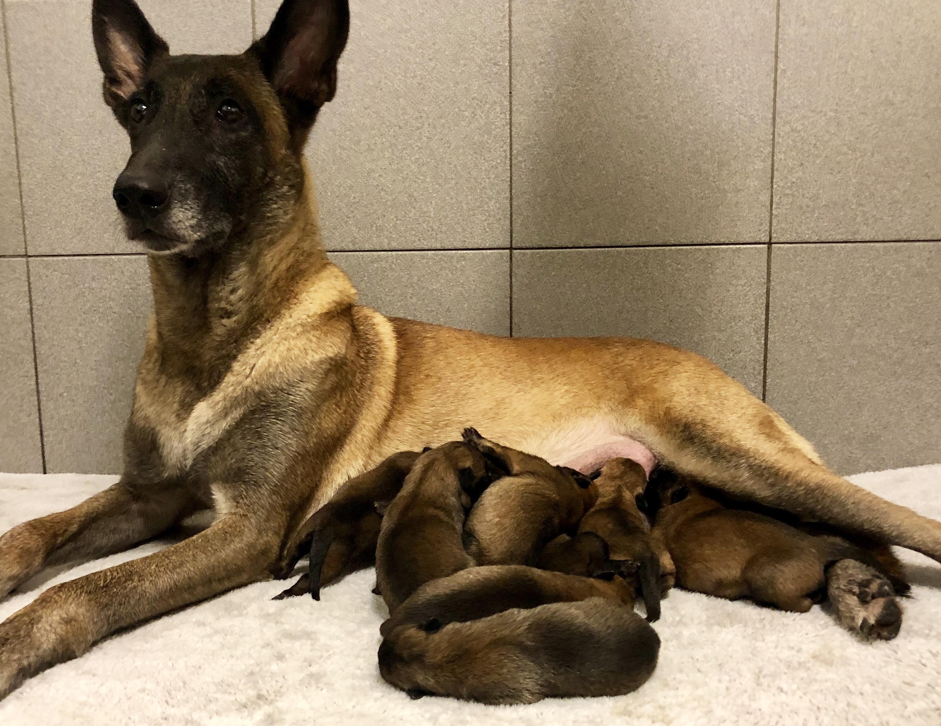 Noah en pups